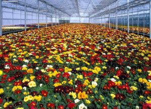 Blumenstecker-Drucker müssen auch unempfindlich gegen UV-Licht = Sonnenlicht, Regen, Frost, Schnee, Hitze drucken