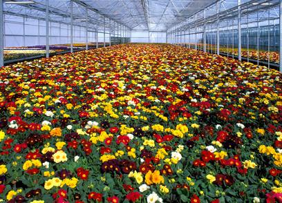Pflanzenstecker für Frühlingsblumen Fotolia_1428240_XS